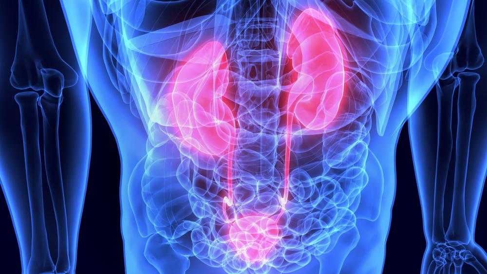 Understanding glomerular filtration rate